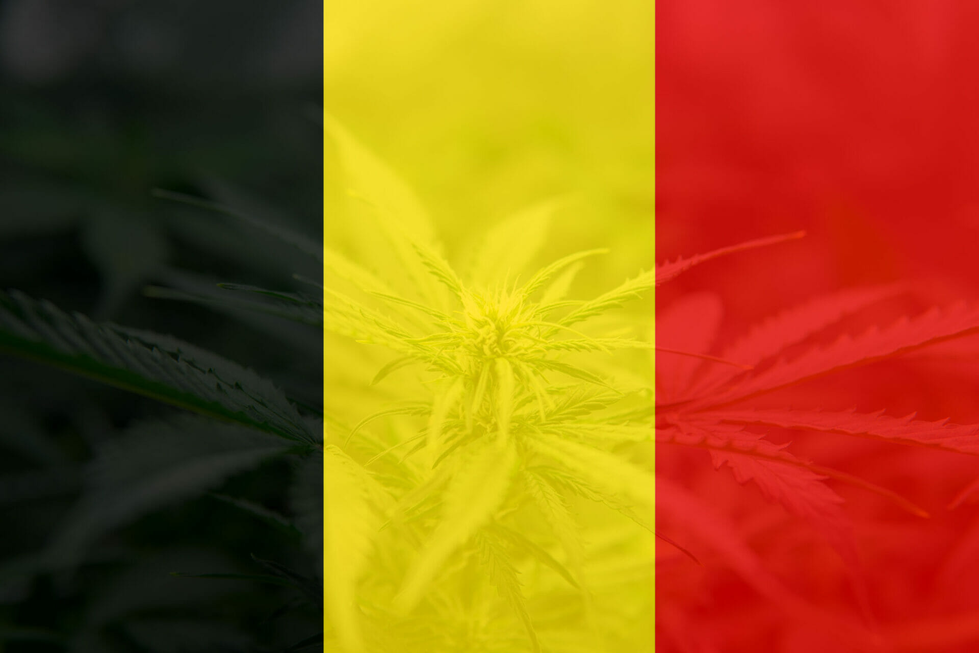 Où acheter cannabidiol belgique | achat Belgique cannabidiol