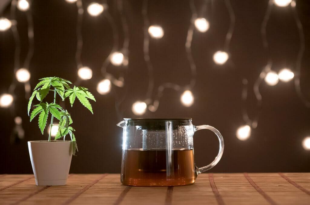 bamboo table with marijuana plant in pottery. hot cbd tea and teapot.